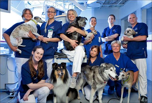 djurkliniken_roslagstull